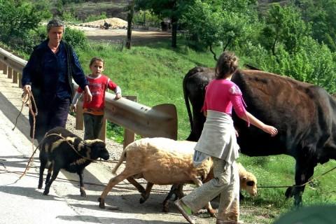 unterwegs: Frauen mit Vieh