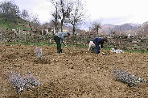 Heranziehen von Baumsetzlingen, 2004