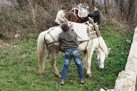 Maultiere und Pferde sind hier noch wichtige Transportmittel