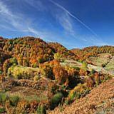 Herbstwald-Panorama oberhalb von Bishnica