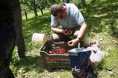 Frisch geerntete Kirschen, eine der wenigen einheimischen Sachspenden aus der armen Mokra-Region